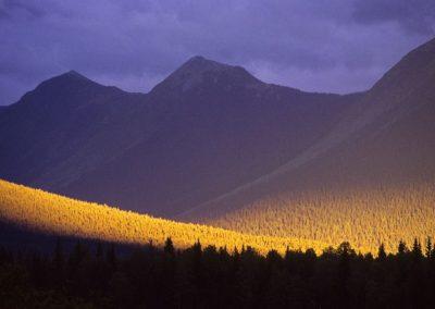 Yellow-Valley-1024x682