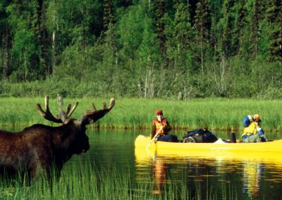 moose-slide-2-1024x480